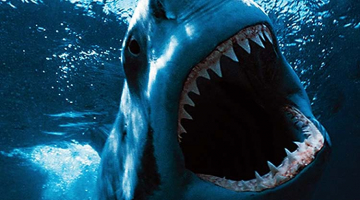 Noticia_Shark