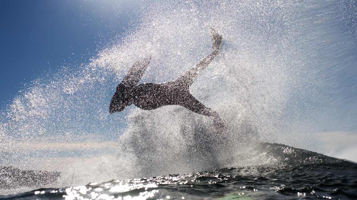 Oceanus Imago | Mauro Bandeiras
