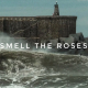 Video_SmellRoses